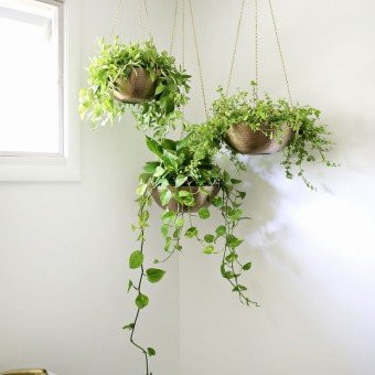 14 DIY Hanging Planter Ideas for the Bungalow